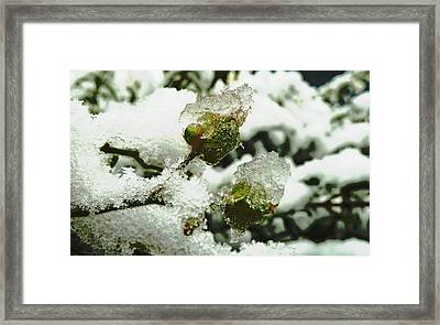 Framed Print featuring the photograph Liquid Crystal  by Steve Taylor