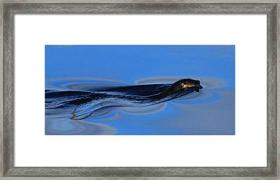 Liquid Silk Framed Print by Wild Expressions Photography