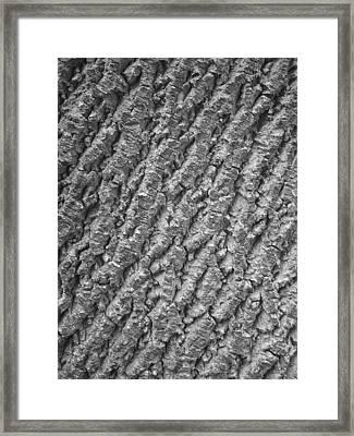 Liriodendron Tulipifera - American Tulip Tree   Framed Print
