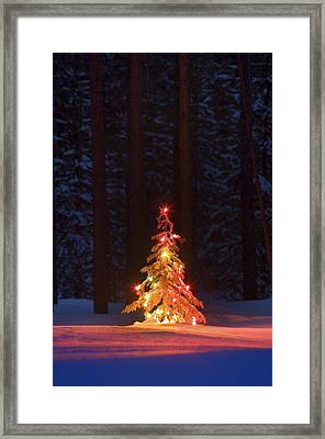 Lit Christmas Tree In A Forest Framed Print by Carson Ganci