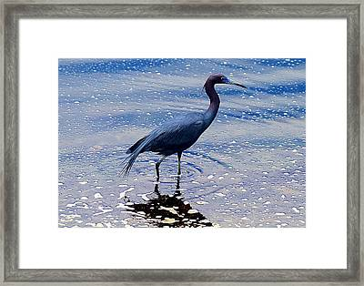 Framed Print featuring the photograph Lit'l Blue by Elizabeth Winter