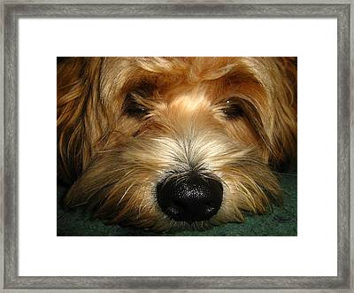 Little Angel Framed Print by Bruce Carpenter