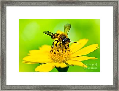 Little Bee In Yellow Flower Framed Print by Peerasith Chaisanit