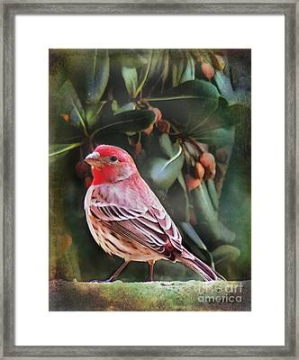 Framed Print featuring the digital art Little Bird Iv by Rhonda Strickland