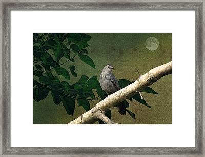 Little Bird Framed Print by Tom York Images