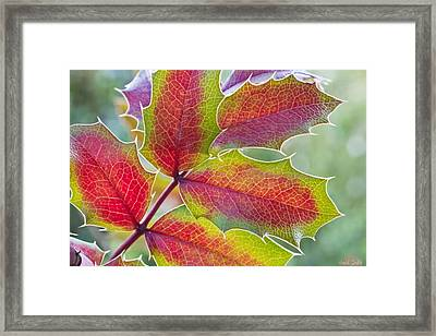 Little Bit Of Autumn Framed Print by Heidi Smith