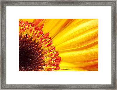Framed Print featuring the photograph Little Bit Of Sunshine by Eunice Gibb