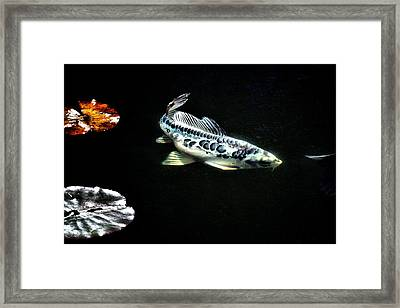 Little Blue Cruising Framed Print