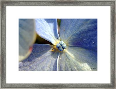 Little Blue Flower Framed Print