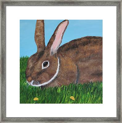 Little Brown Bunny Framed Print by Christie Minalga