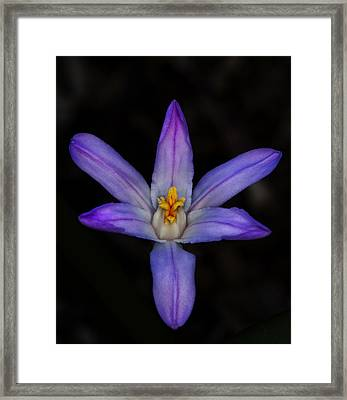 Little Can Be Beautiful Framed Print
