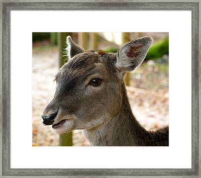 Little Deer Framed Print by Karen Grist