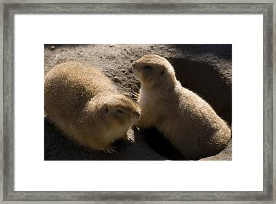 Little Dogs On The Prairie Framed Print by Trish Tritz