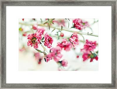 Little Dreams On Stems Framed Print