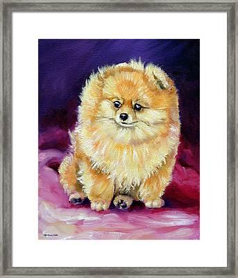 Little Dude - Pomeranian Framed Print