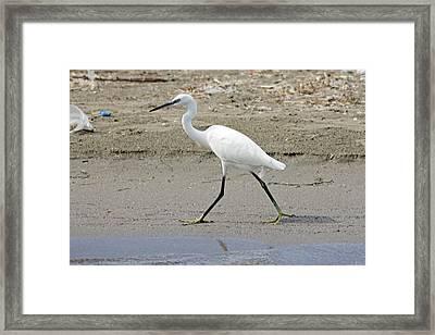 Little Egret Framed Print by Tony Murtagh