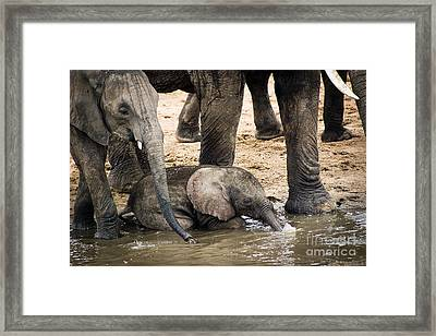 Little Elephant Blowing Bubbles Framed Print by Darcy Michaelchuk