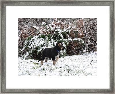 Little Explorer  2 Framed Print by Tanya  Searcy