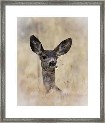 Framed Print featuring the photograph Little Fawn by Steve McKinzie