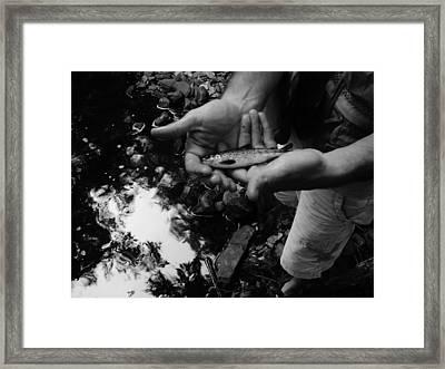 Little Fish Framed Print by Sarah Buechler