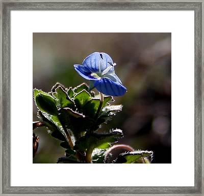 Little Flower Framed Print