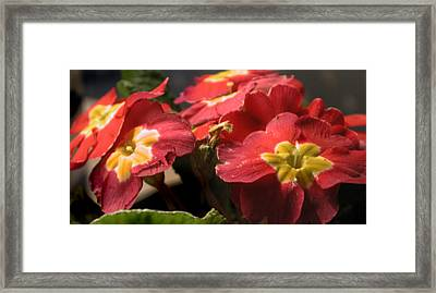 Little Flowers Framed Print