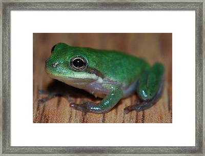 Little Frog Framed Print by Carrie Munoz