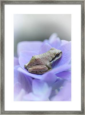 Little Frog On Hydrangea Flower Framed Print by Jennie Marie Schell
