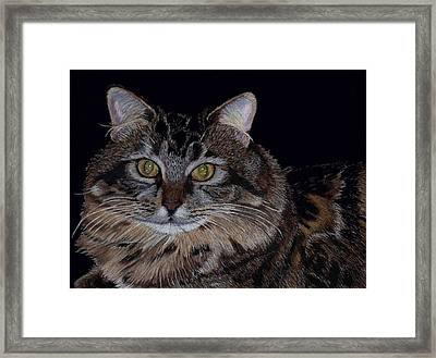 Little Girl - Maine Coon Cat Painting Framed Print