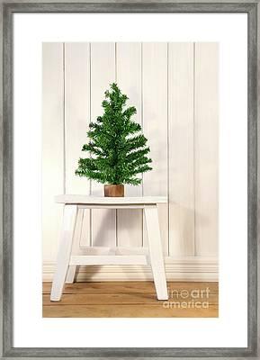 Little Green Fir Tree Framed Print by Sandra Cunningham