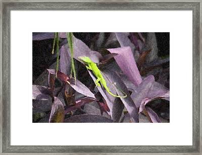 Little Green Lizard Framed Print by Donna  Smith