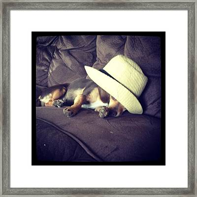 Little Guy Was So Tired He Fell Asleep Framed Print by Stephanie Brown