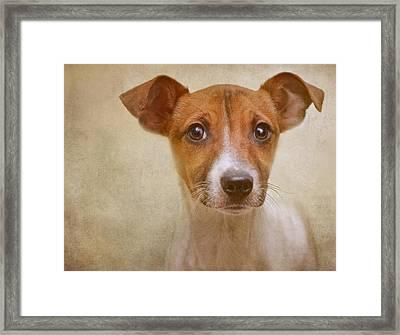 Little Jack In Pastels Framed Print