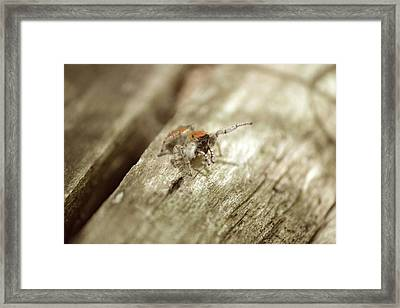 Framed Print featuring the photograph Little Jumper In Sepia by JD Grimes
