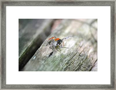 Little Jumper Framed Print by JD Grimes