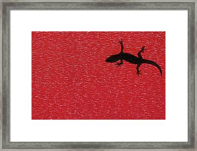 Little Lizard Framed Print by Hidayat Mercado