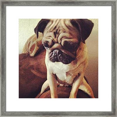 Little Lo. #puppy #pug #iphone Framed Print