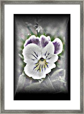 Little Pansy Framed Print by Karen Harrison