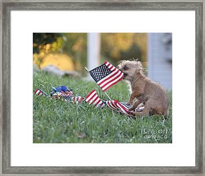 Little Patriot Framed Print by Billie-Jo Miller