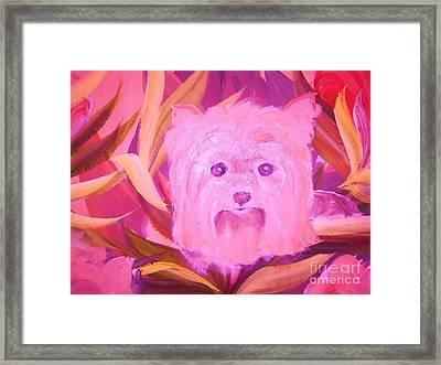 Little Pink Yorkie Framed Print by Rachel Carmichael