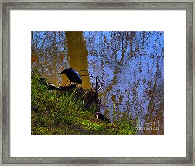 Little Pond At The Zoo Framed Print