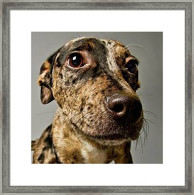 Little Pup Framed Print by Square Dog Photography