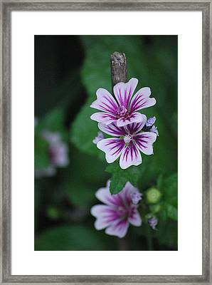 Little Purple Flowers Framed Print