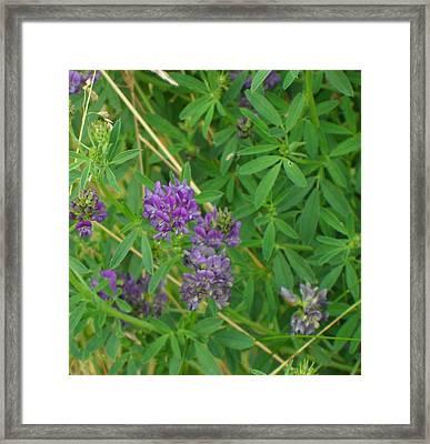 Little Purple Rascals Framed Print