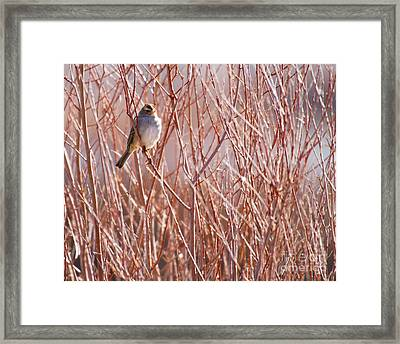 Little Sparrow Framed Print by Sabrina L Ryan