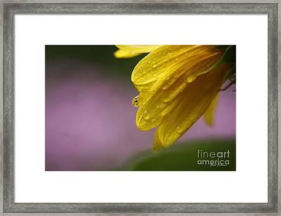 Little Sunflower Framed Print by Yumi Johnson