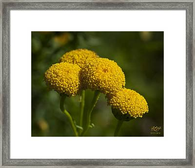 Little Suns Framed Print