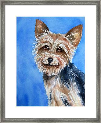 Little Yorkie Framed Print by Cherilynn Wood