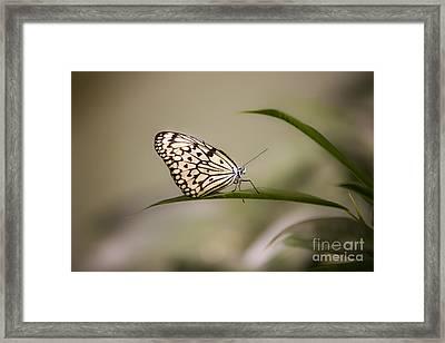 Little Zebra Framed Print by Leslie Leda
