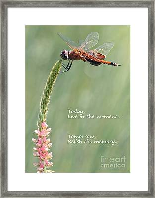 Live In The Moment  Framed Print by Carol Groenen
